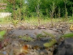 Big Snake and tiny snail