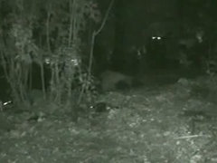 Skinny girl pissing in the woods caught on voyeur nightcam